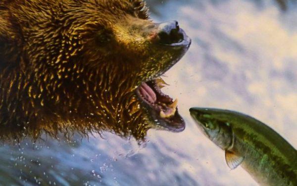 Afbeelding voor Weten wanneer je de bek open moet doen zodat de vis naar binnen zwemt